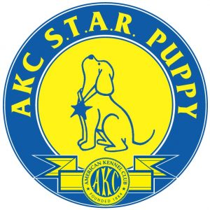 AKC STAR Puppy Testing in Providence, RI | Spring Forth Dog Academy