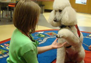 """Why """"Paw"""" is Problematic 