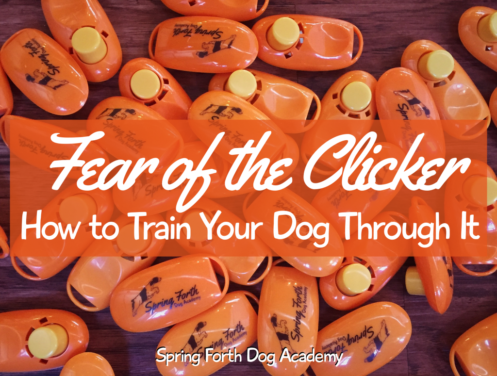 Fear of the Clicker: How to Train Your Dog Through It | Spring Forth Dog Academy in Providence, RI