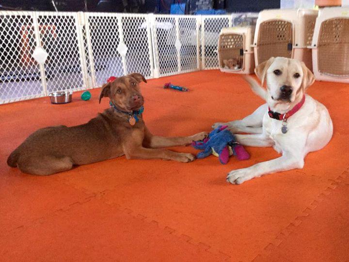 Puppy Day School Participants