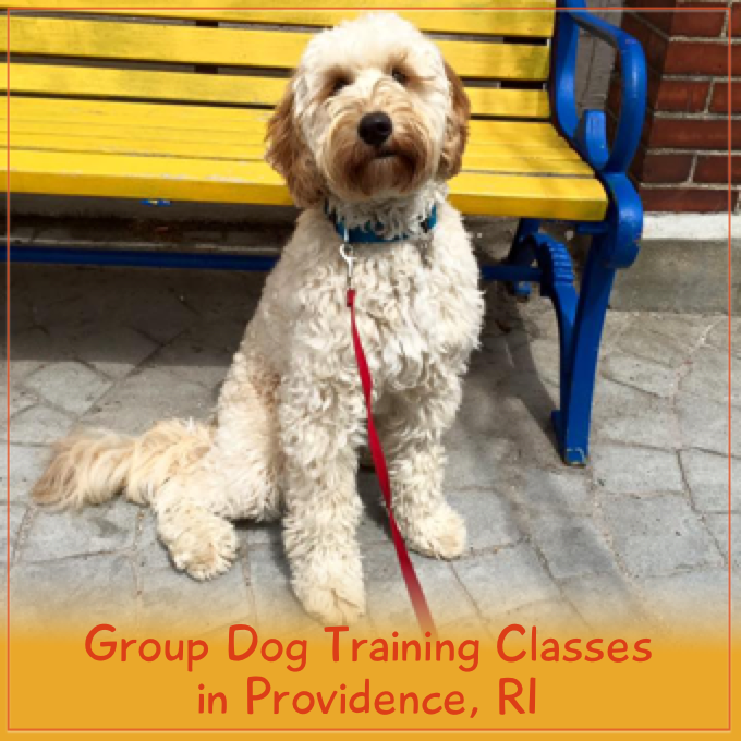 Group Dog Training Classes in Providence, RI