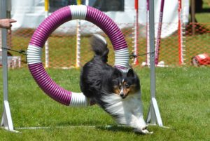 Dog Agility Classes in Providence, RI | Spring Forth Dog Academy
