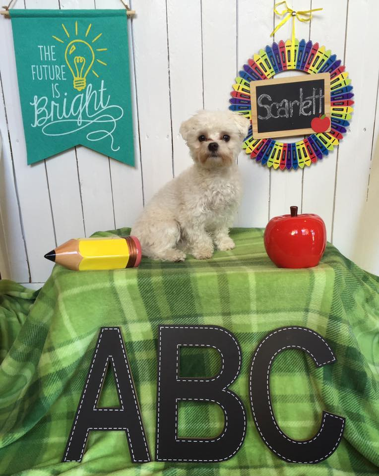Puppy Day School | Puppy Training in Providence, RI | Spring Forth Dog Academy