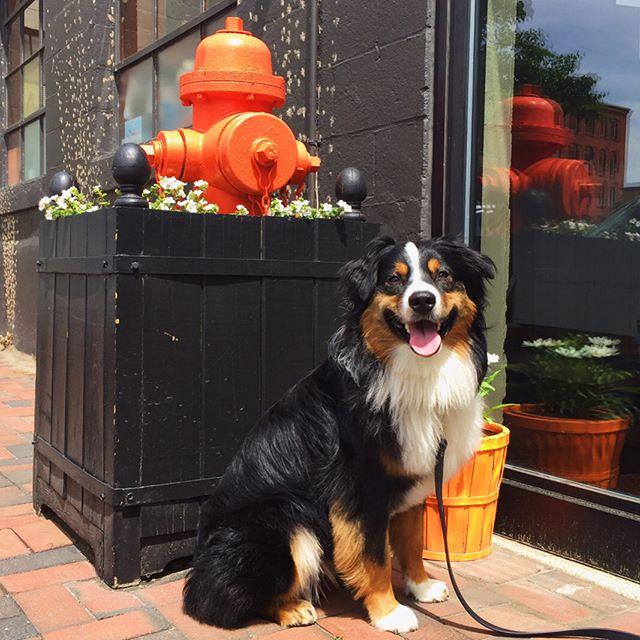 Dog Training in Providence, RI | Spring Forth Dog Academy