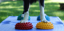 Intro to Dog Fitness Workshop with Carolyn Close CCFT
